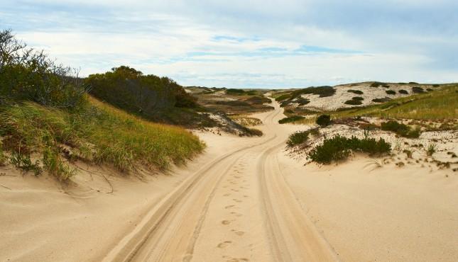 Sand Dunes Cape Cod