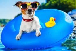 pet-water-beach-dog-web