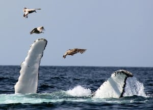 Whale watch 4
