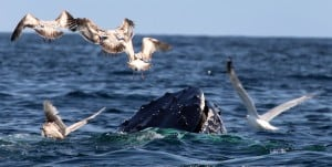 Whale Watch 3