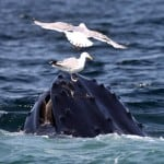 Whale Watch 6