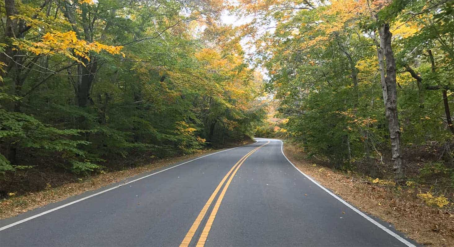 Provincetown road to the beach through tree lined road
